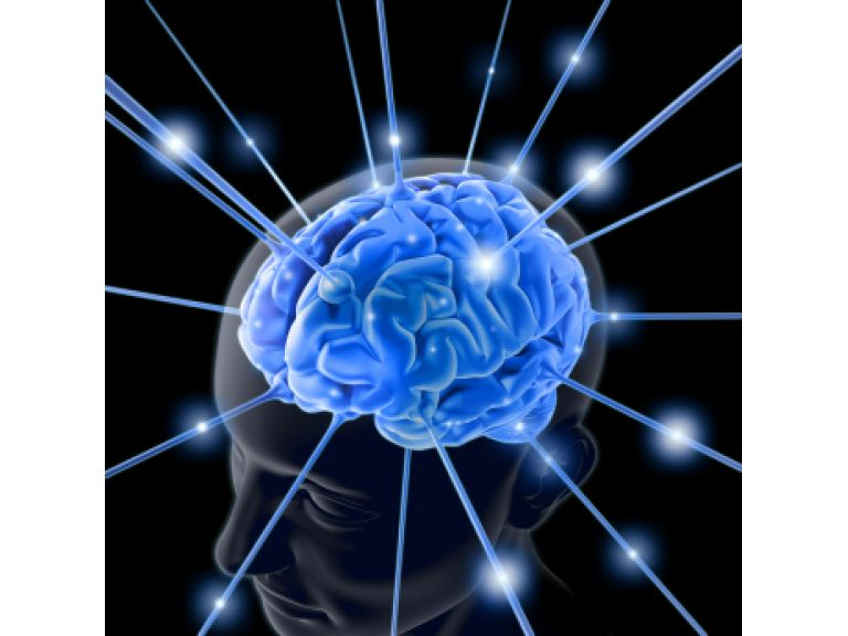 El cerebro humano funciona como una colonia de hormigas